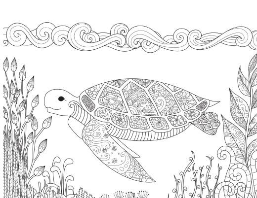 Coloriage de tortue très difficile par Bimbimkha
