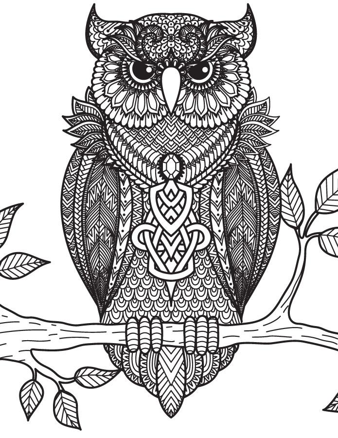 Dessins a dessiner art th rapie bestiaire difficile hibou - Chouette a dessiner ...