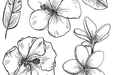 Fleurs et feuilles dessin facile à imprimer pour destresser