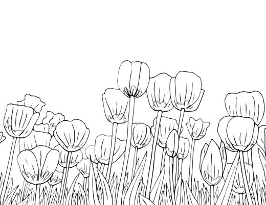 Tulipes dessin à colorier du printemps
