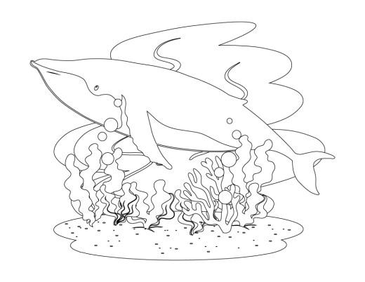 Dessin de la mer baleine à imprimer