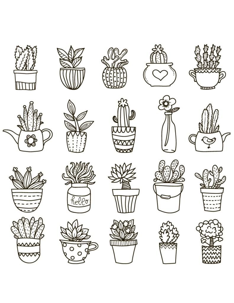 Succulente, cactus et fleurs à dessiner