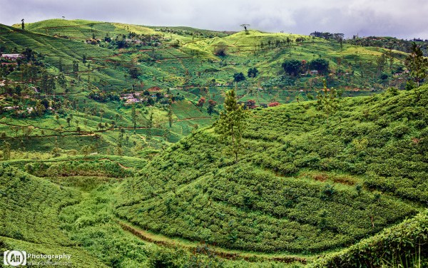 Sri Lanka Highlands