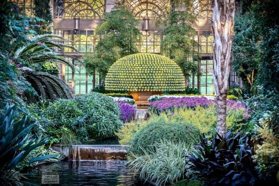 Chrysanthemum Display at Longwood Gardens, Autumn 2017