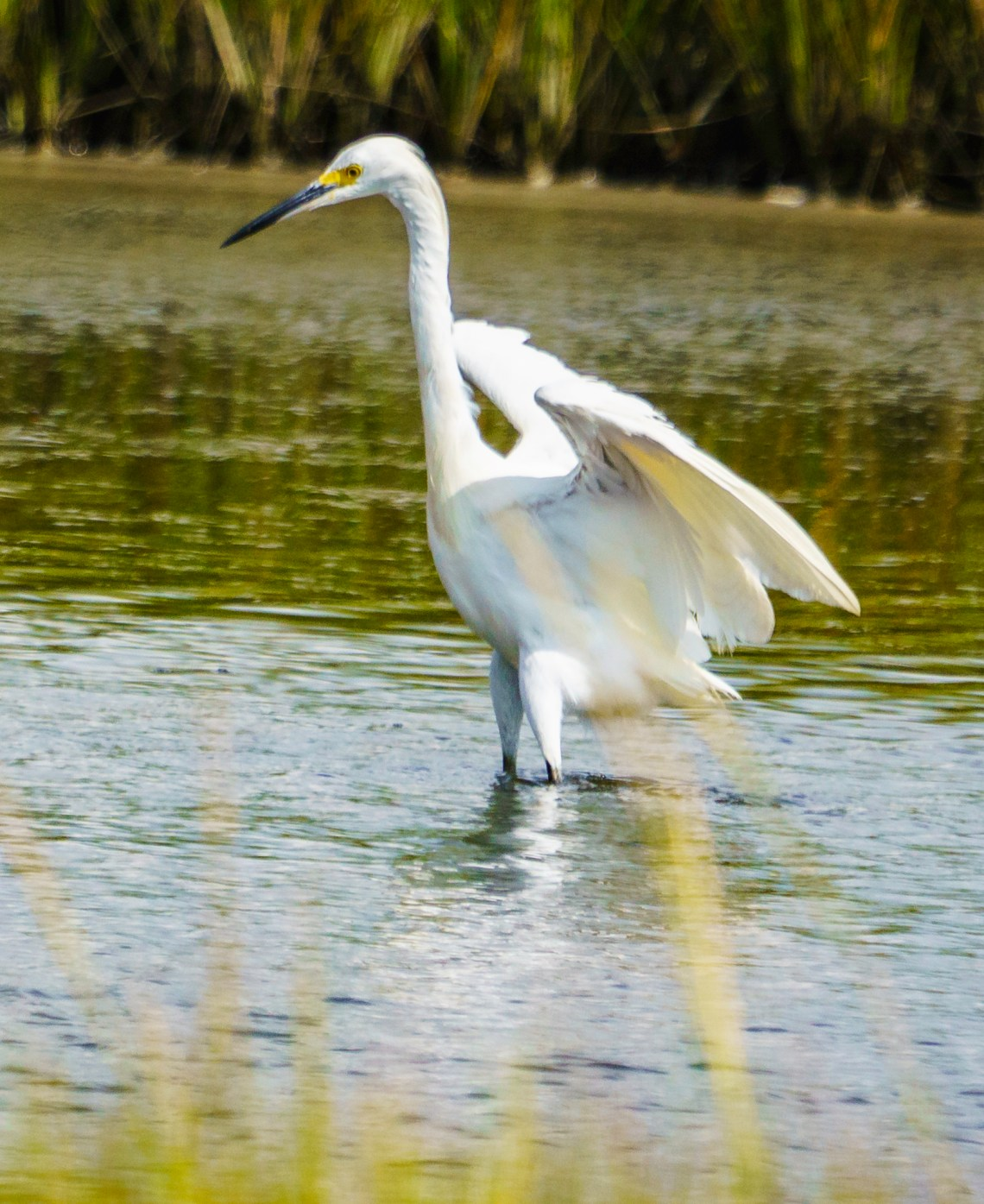 Magical Marsh Dancer, #5 of 5