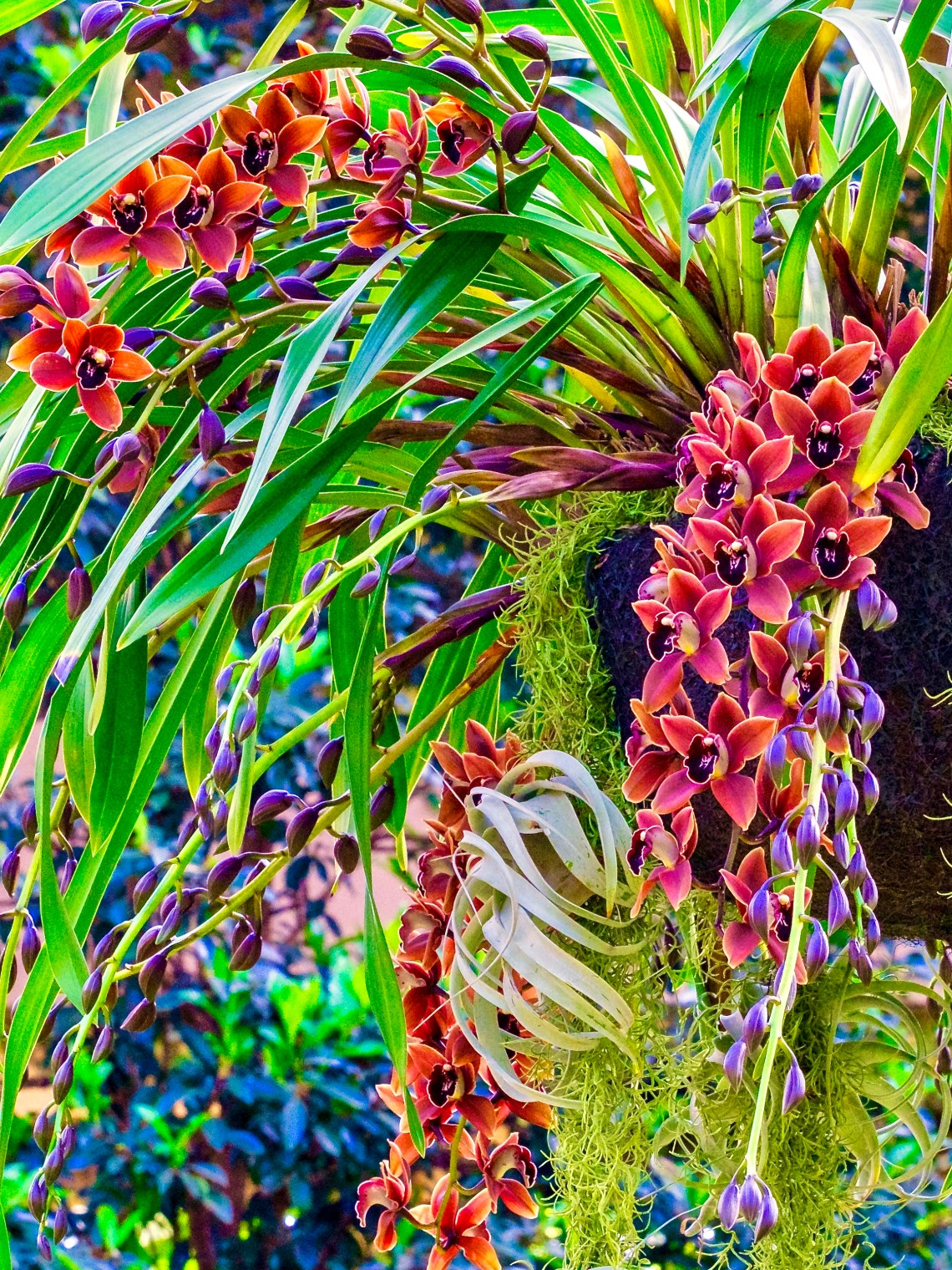 """Orchids in the """"Wild,"""" #2 of 2 photographs"""