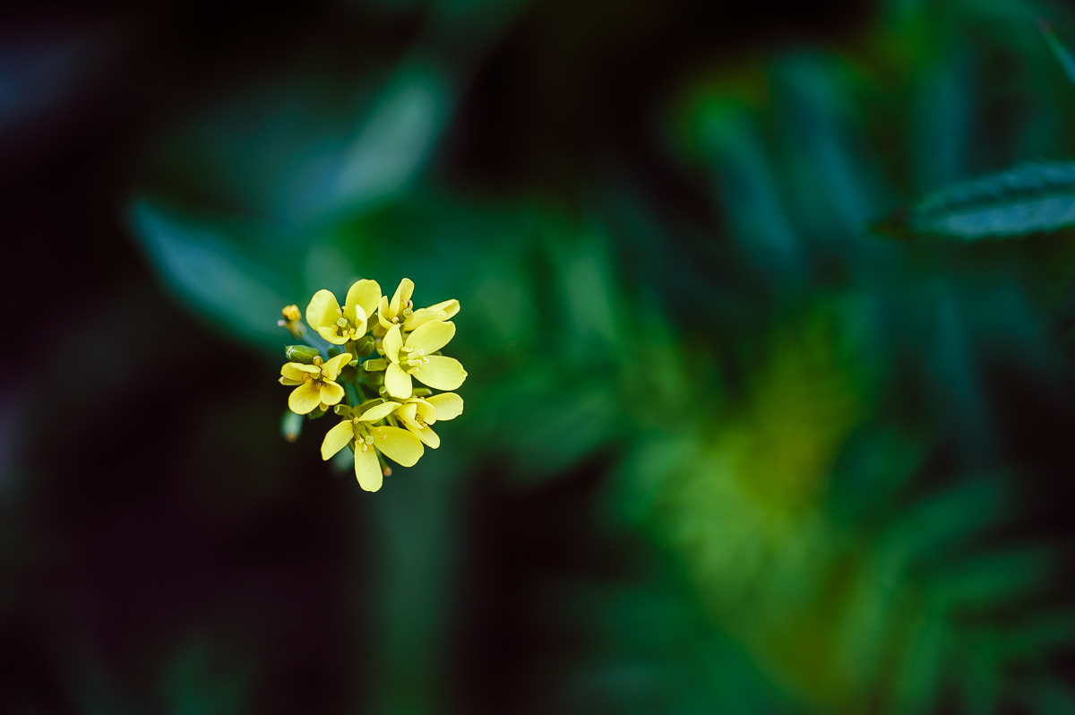 beauty in the tiny - flower