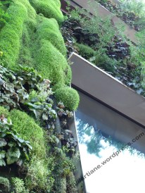 éclat sur mur végétal