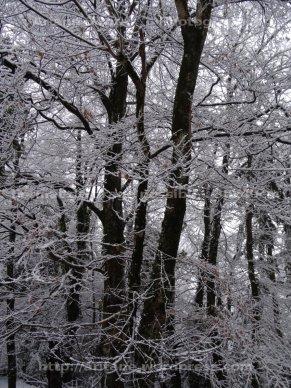 Noir et neige
