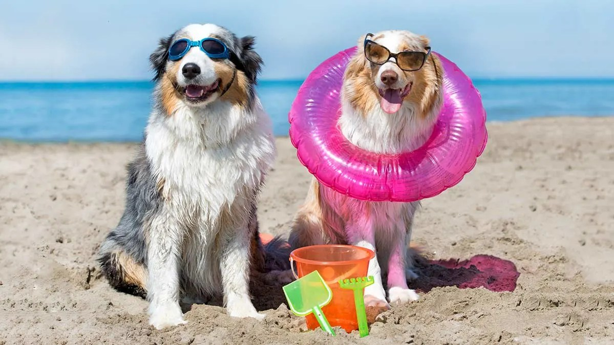 Cost Of Taking A Vacation With Your Dog Consumer Reports