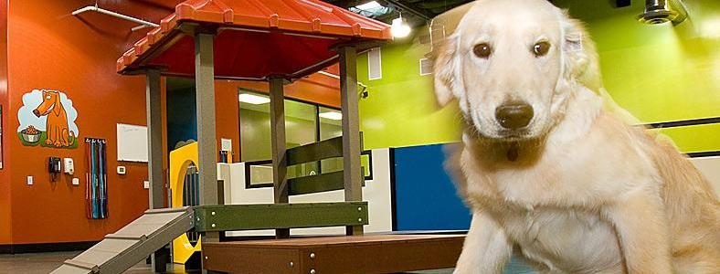 Business idea - Doggie Day Care