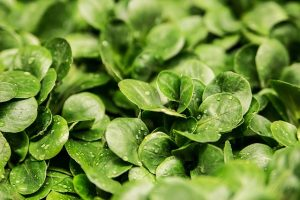 Five Foods That Fight Belly Flab 12