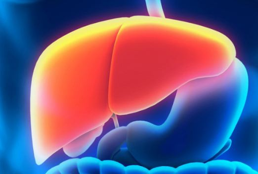 Can You Live without a Liver
