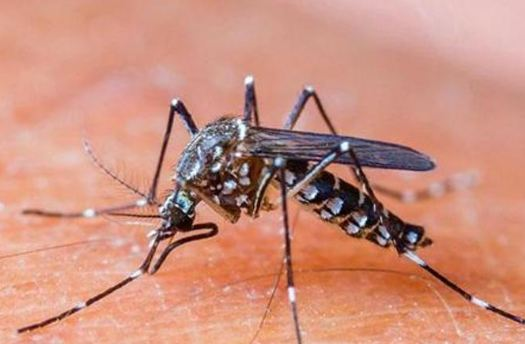 Which Insect carries a Sickness called Malaria