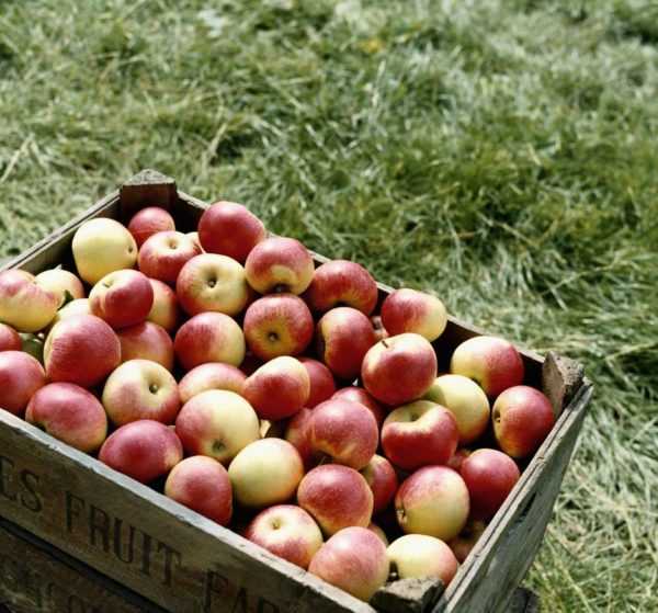 Check out 8 Health Benefits of Apple
