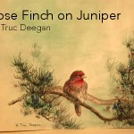 Rose Finch on Juniper • by Truc Deegan