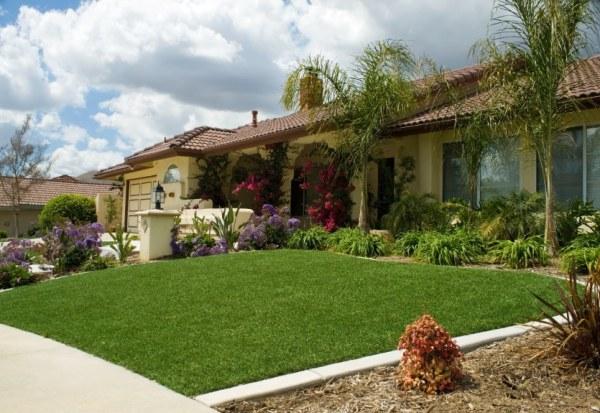 drought tolerant lawn alternative