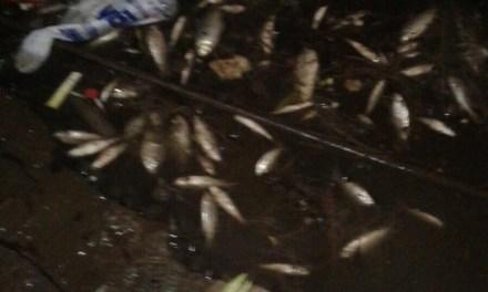Preocupación en la población por la mortandad de peces en el lago del paseo 7 de septiembre