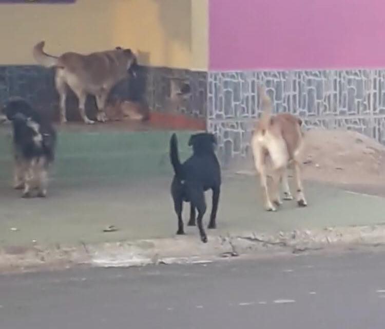 Reclaman la vuelta de la perrera en Artigas