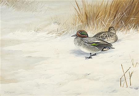 Teal in Hard Weather