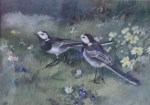 Wagtail, Wagtail All