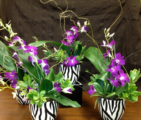 "Show your Valentine your ""wild side"" with a zebra patterned ceramic container and tropical orchids."