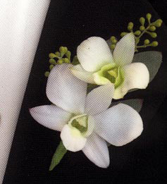 White_orchid_bout