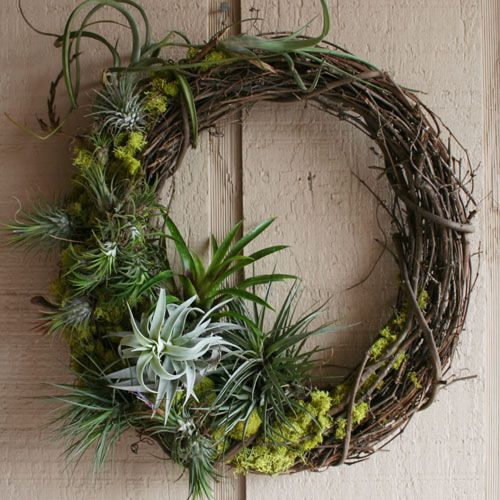 air_plant_wreath