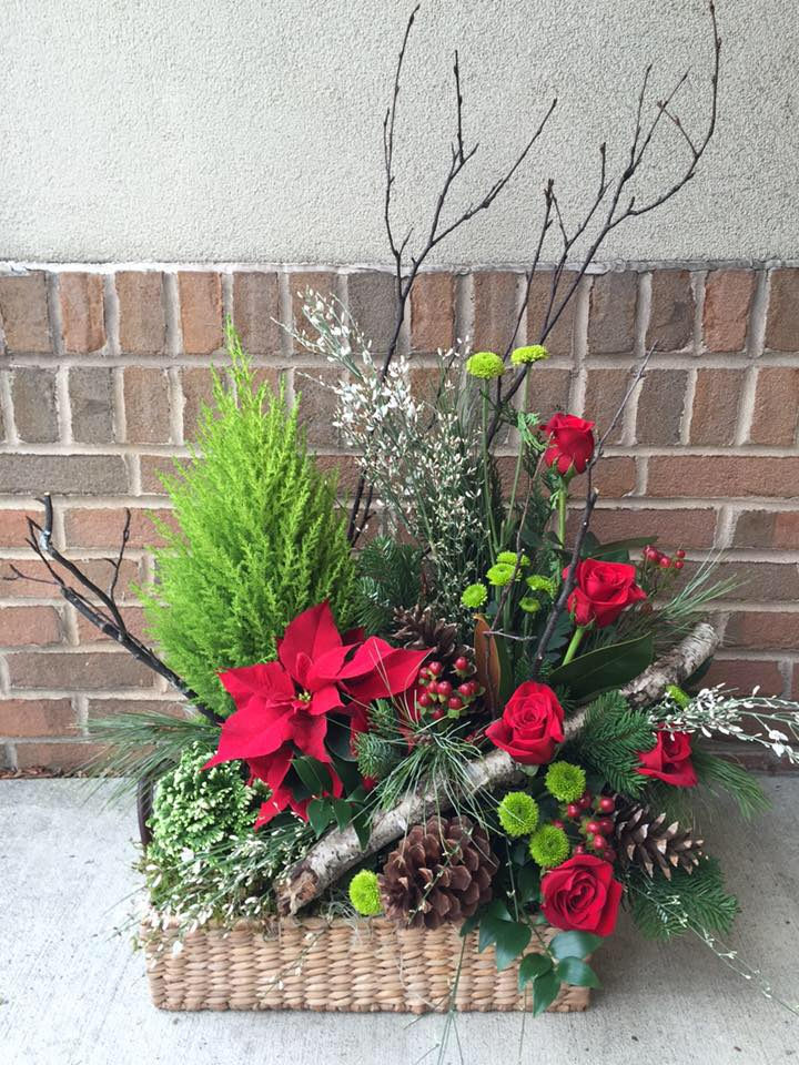 Holiday_plants_n
