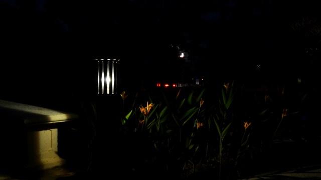 Luz y Flores