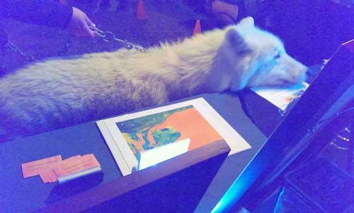 Atka the Arctic Wolf studies my Art