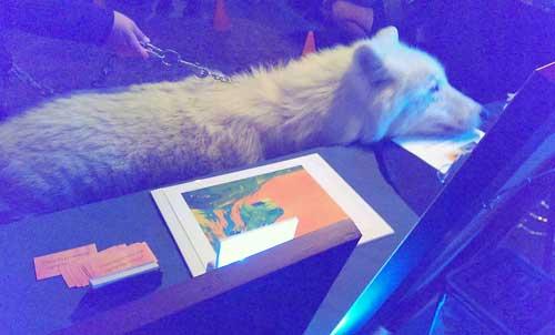 Atka the Arctic Wolf studies my Art