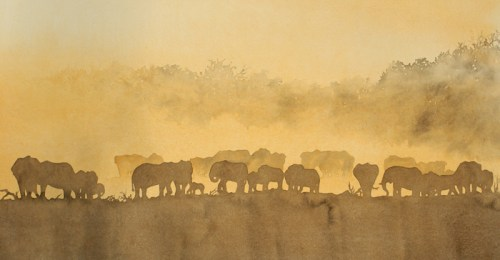 Elephant Dust © Alison Nicholls 2007