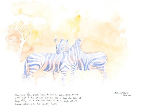 Resting Zebra Field Sketch © Alison Nicholls 2011