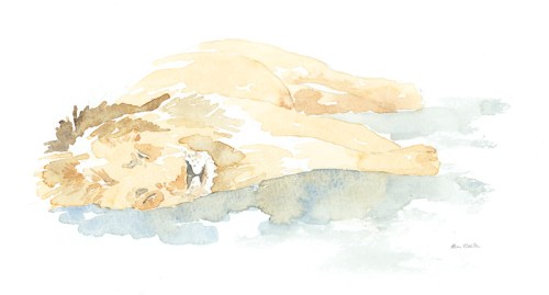 Sleeping Lion Field Sketch © Alison Nicholls 2011