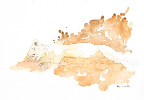 Young Male Lion Field Sketch © Alison Nicholls