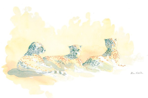 Cheetah Trio Field Sketch by Alison Nicholls