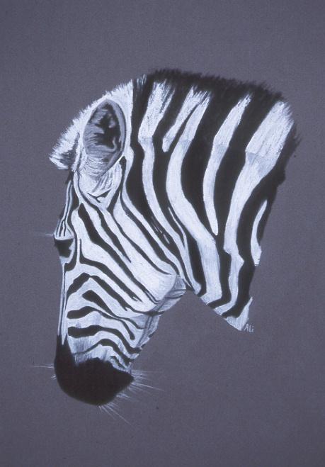 "Zebra, pastel 20x16"" by Alison Nicholls"