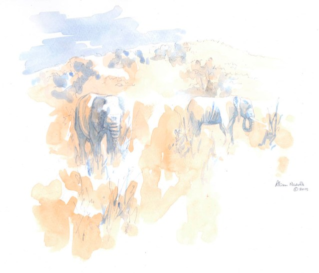 Browsing Elephants Field Sketch by Alison Nicholls