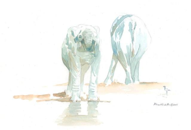 Elephant Drinking Field Sketch by Alison Nicholls