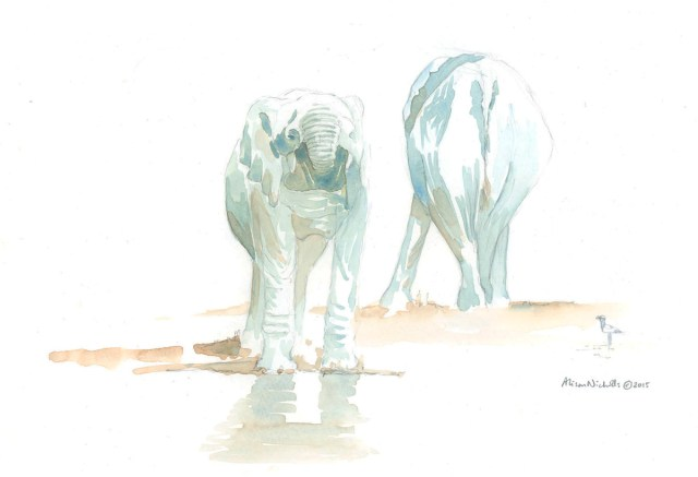 Elephant Drinking Field Sketch by Alison Nicholls