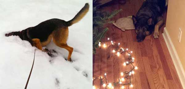 Chase at Christmas