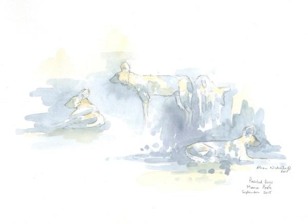 Dog Pack Field Sketch © Alison Nicholls 2015