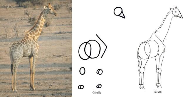 Stages of a giraffe sketch by Alison Nicholls
