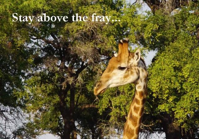 Giraffe by Nigel Nicholls