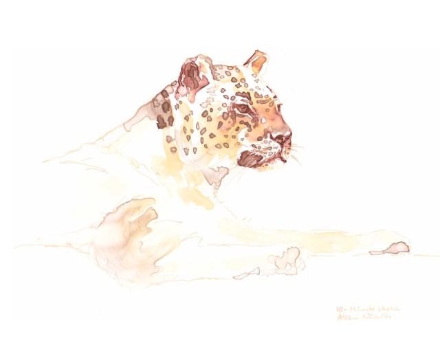 Leopard Lines sketch by Alison Nicholls