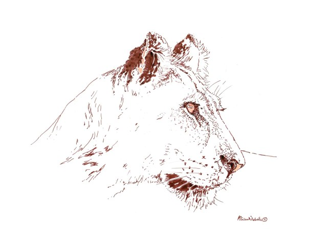 Lioness in ink by Alison Nicholls