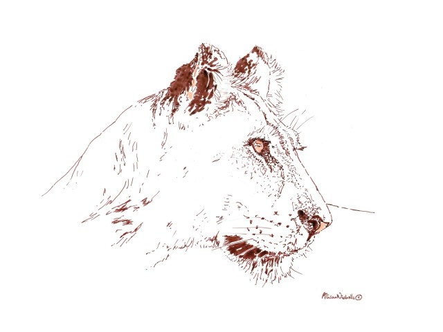 Lioness in ink by Alison Nicholls