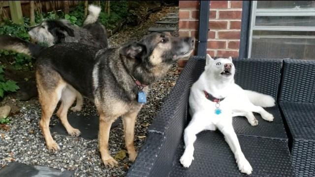 Chase, Gordon, Tiberius