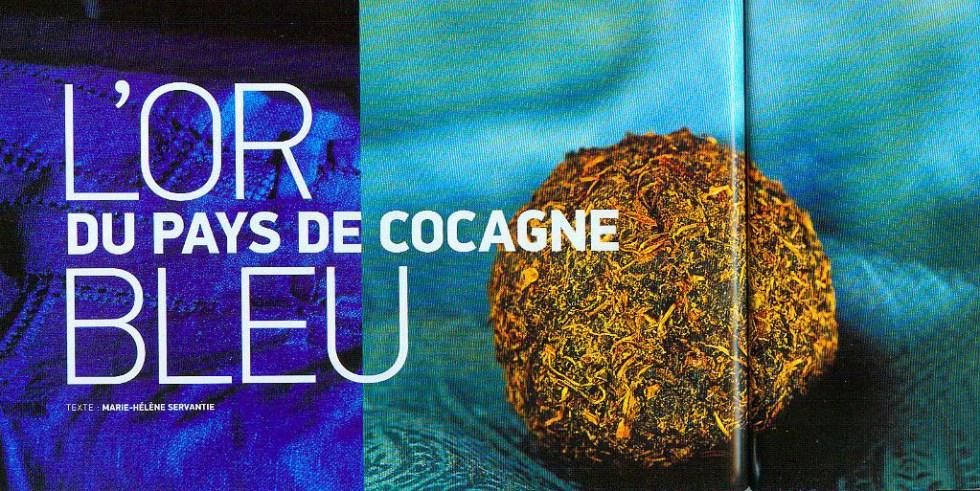 Pastel, l'or bleu du pays de cocagne